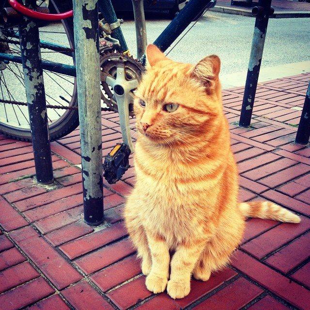 Bonjour Ginger Kitty