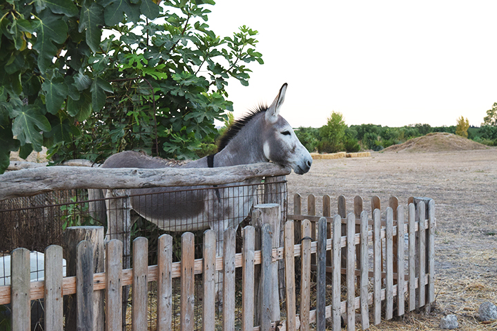 Donkey at Rancho Cortesano